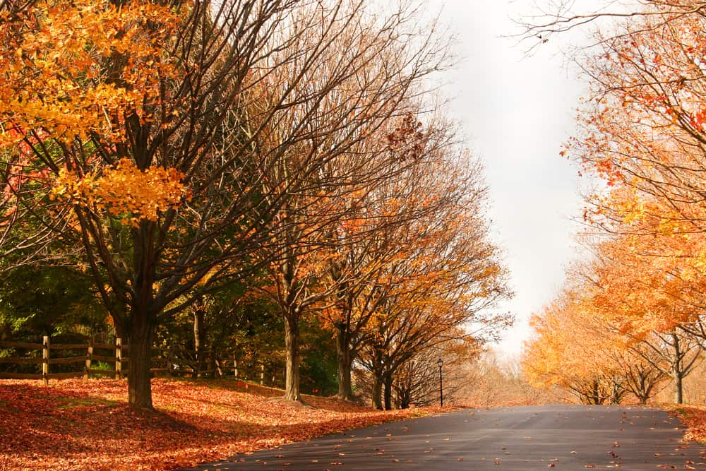 Autumn weather and fall leaves in Olney, MD
